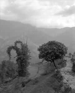 Two-trees-Nepal.jpg